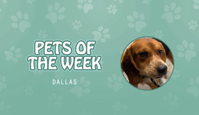 Pet of the Week - Dallas