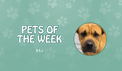 Pet of the Week - Baj