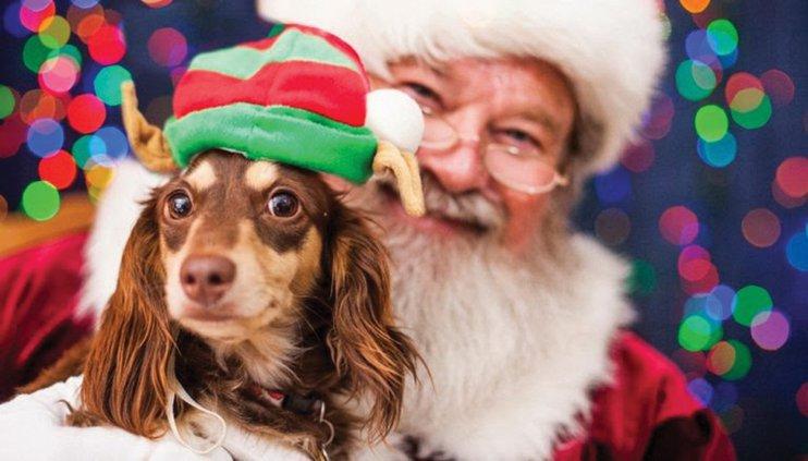 HAWC - Santa pet picture.jpg
