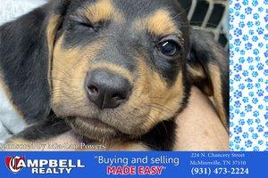 Pets of the WeeStill026.jpg