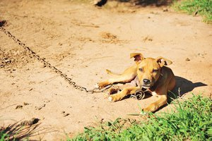 Dog tethering.jpg