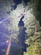 Hung in tree2.jpg